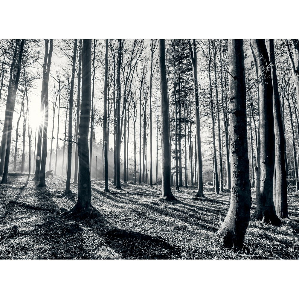 1wall Black And White Forest Trees