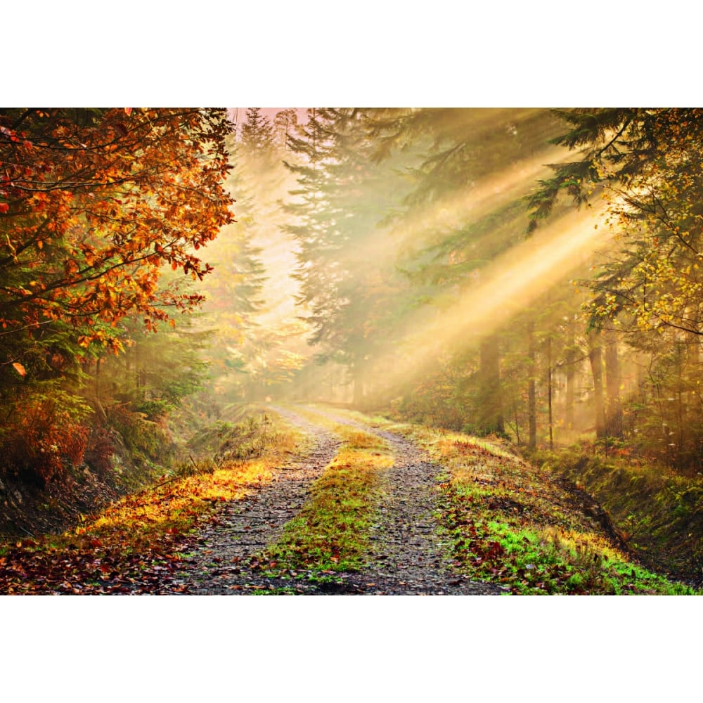 Autumn Forest Path Woodland Wall Mural 366cm x 232cm