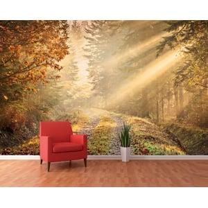 Autumn Forest Path Woodland Wall Mural | 366cm x 253cm