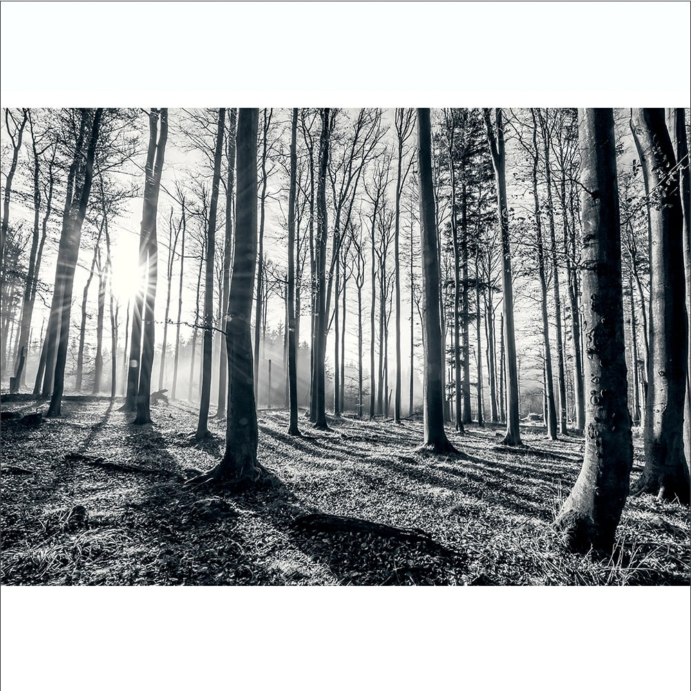 Forest wall mural wallpaper home design for Black and white tree wallpaper mural