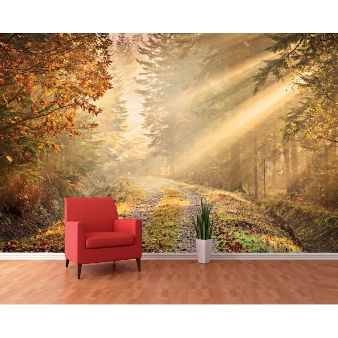 1Wall Autumn Forest Path Woodland Wall Mural | 366cm x 253cm