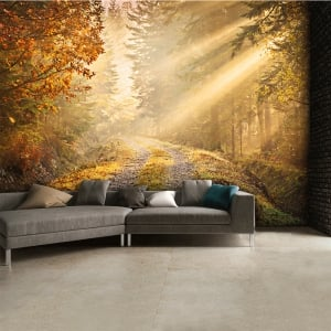 Autumn Forest Woodland Wall Mural | 315cm x 232cm