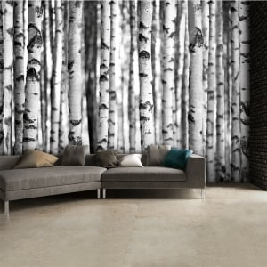 Black and White Birch Trees Wall Mural | 315cm x 232cm