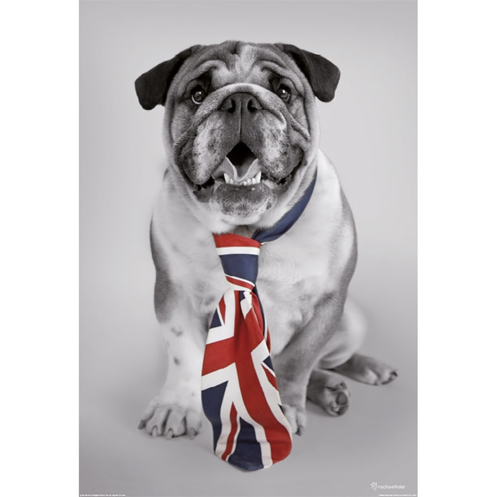 British Bulldog Union Jack Tie Feature Wall Wallpaper Mural 2 Piece Murals  | 158cm X 232cm Part 66