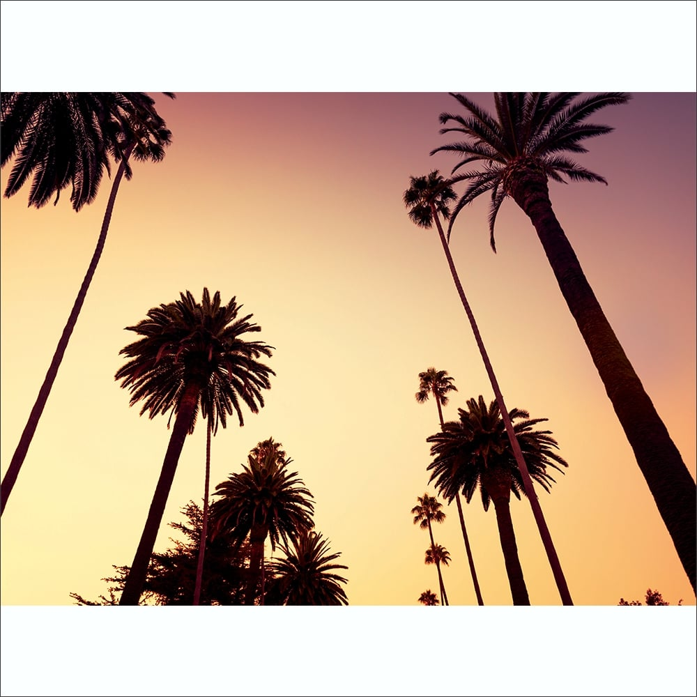 California Palm Trees Wall Mural | 315cm X 232cm