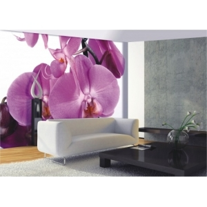 FTS-0049 PINK PURPLE ORCHID WALL MURAL Dimensions: 360 x 253 cm